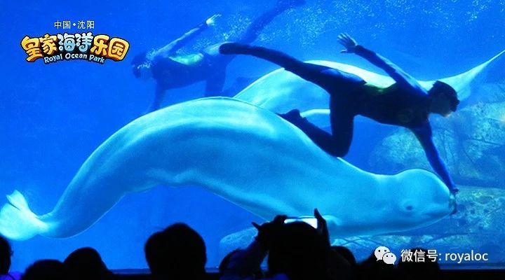 白鲸骑士.jpg
