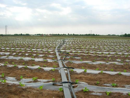 日常灌溉用水