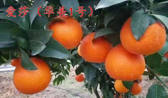 101b1c405328c175e118d5773b08e35_副本.jpg
