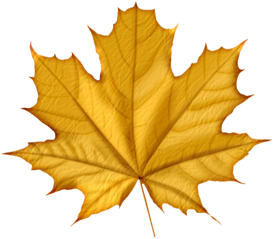 autumn_leaves_PNG3593.png