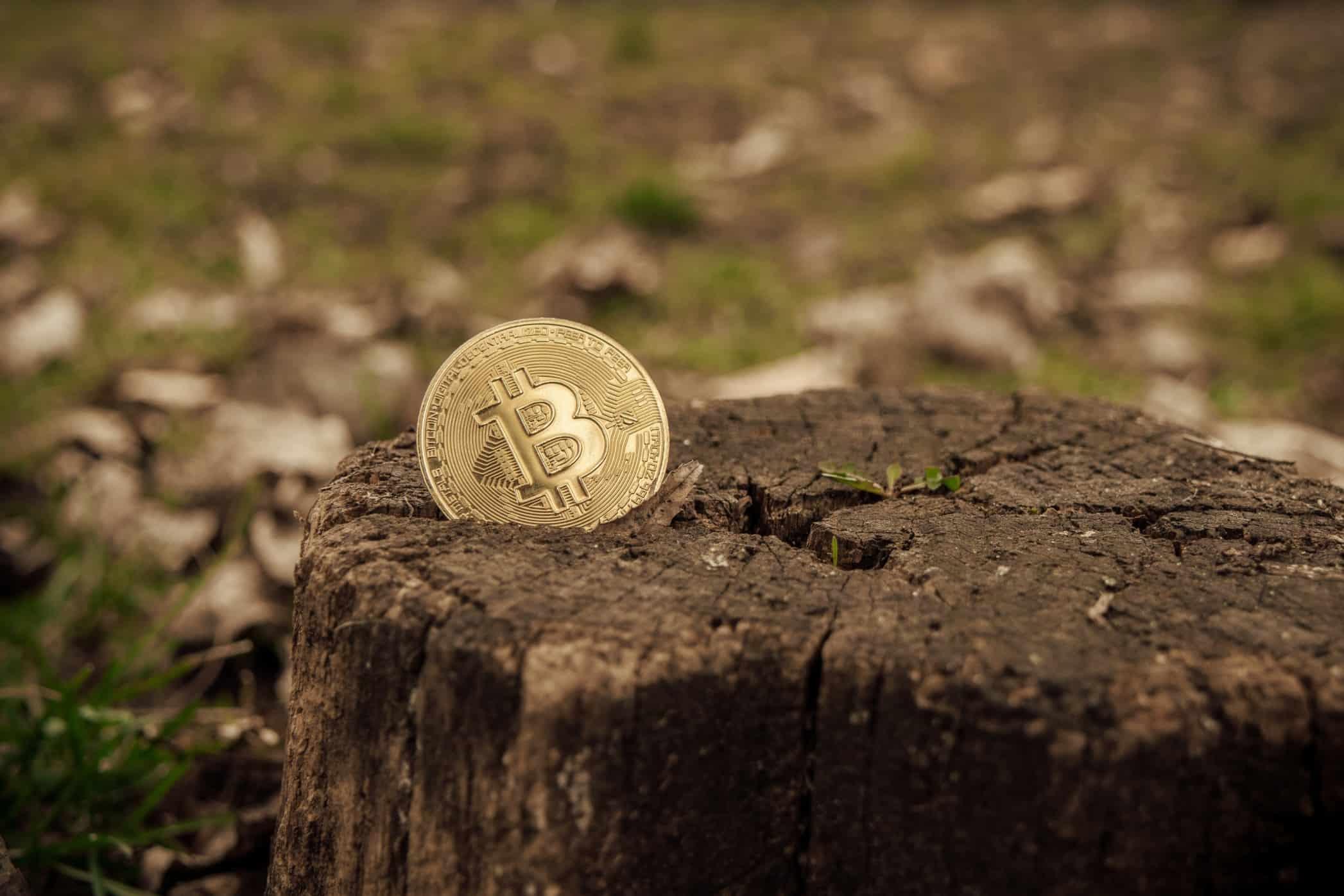 Bitcoin-in-a-tree-Twenty20.jpg