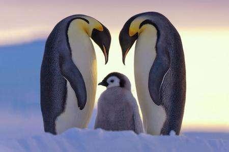 企鹅一家.jpg