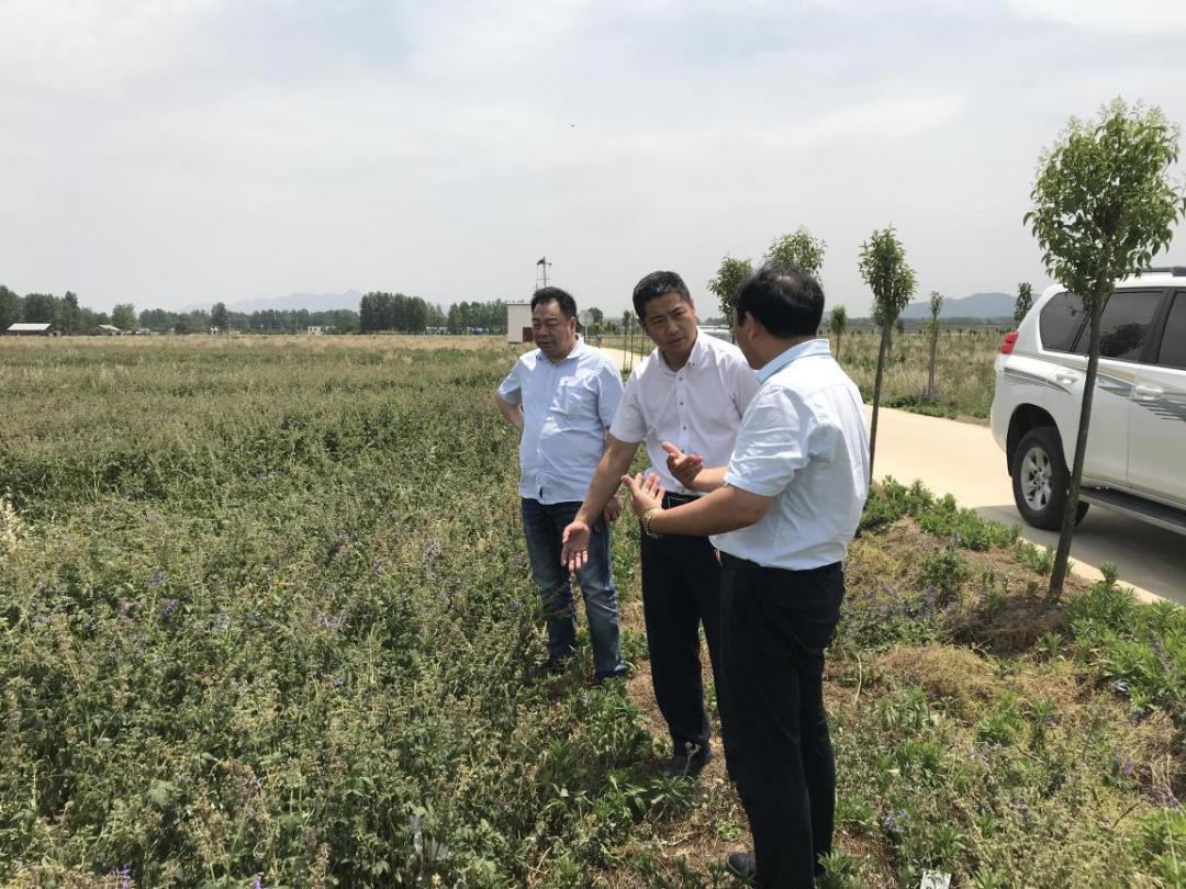 5月20日,刘辰浩行长前往方城支行督导调研,深入考察了当地裕丹参特色农业产业,并对支行业务发展情况进行督导。.png