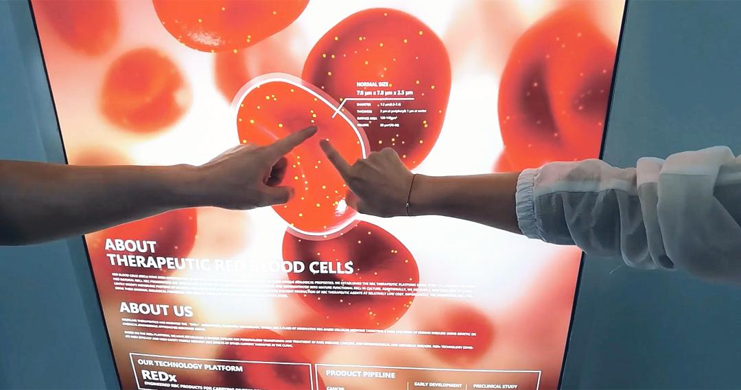指红细胞.png